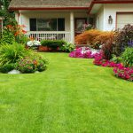How Safe is your Yard from Ticks and Pests?
