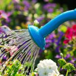 10 late-summer gardening tips