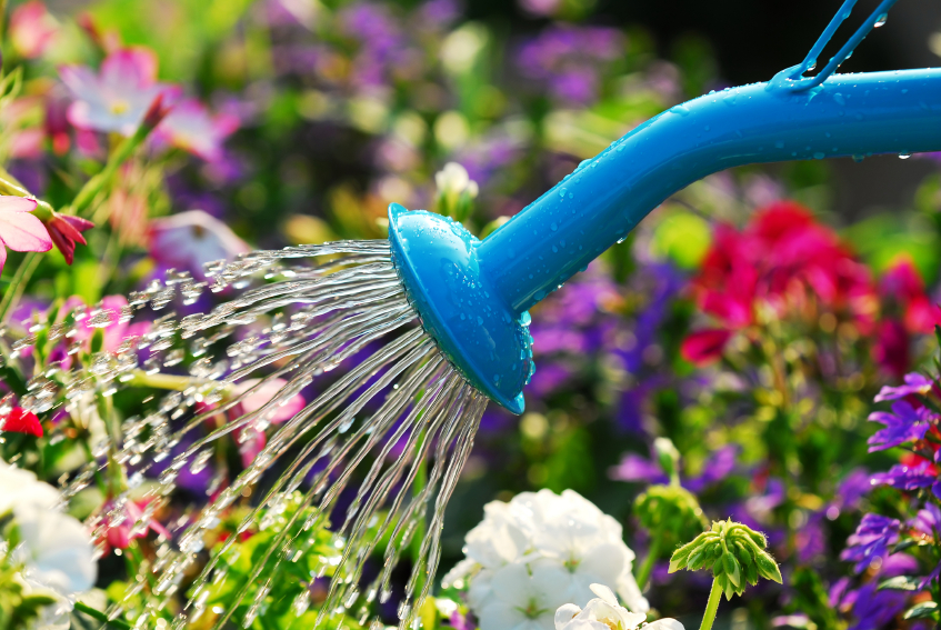 Exceptionnel 10 Late Summer Gardening Tips