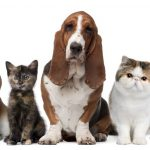Keeping your pets and home clean during the rainy season