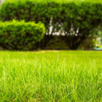 Greet Spring With Green Grass: 5 Tips for Repairing Lawns After Winter